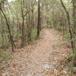On the Guringai walk
