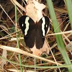 Butterfly (227452)