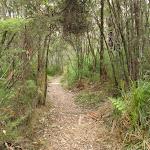 Guringai walking track