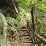 following the Guringai Walk