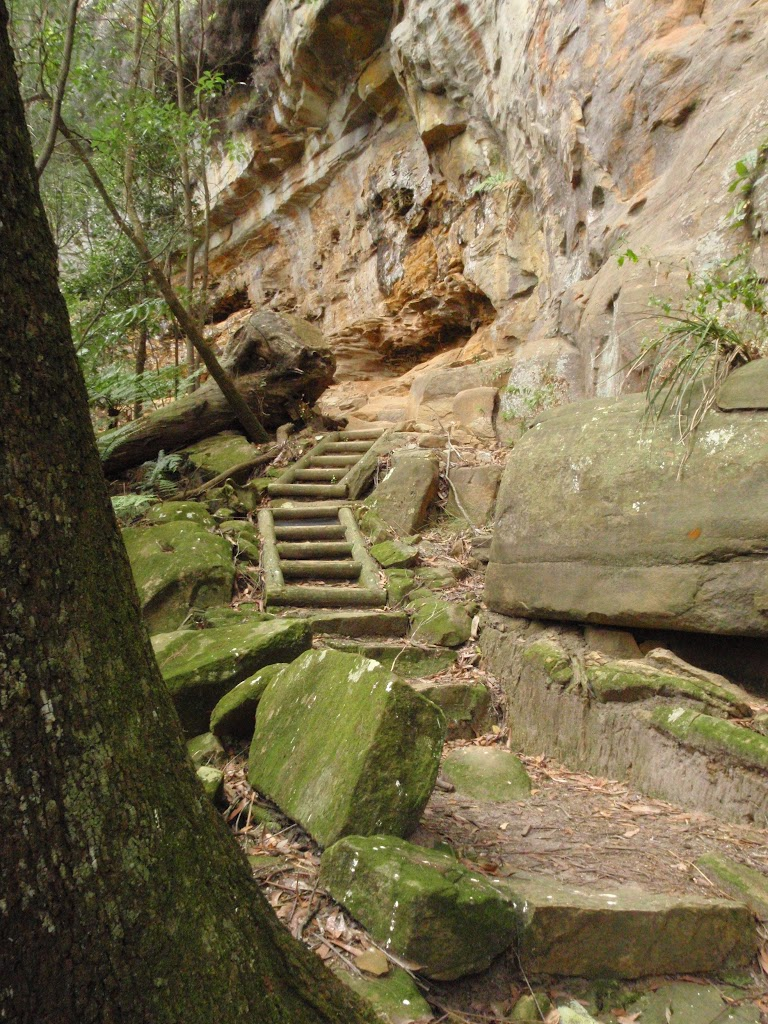 Steps at the base of the cliff on the Guringai Walk (227650)