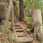 Timber steps on the Guringai Walk