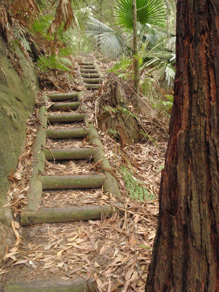 Timber steps on the Guringai Walk (227743)