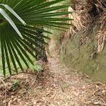 Guringai Walk (227746)