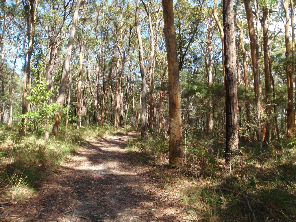 Track to Colin Watters Lookout near the tower