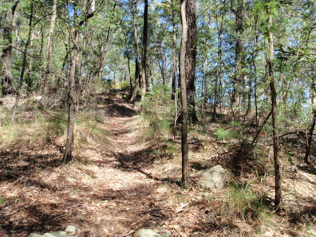Walking through the dry forest on the ridge
