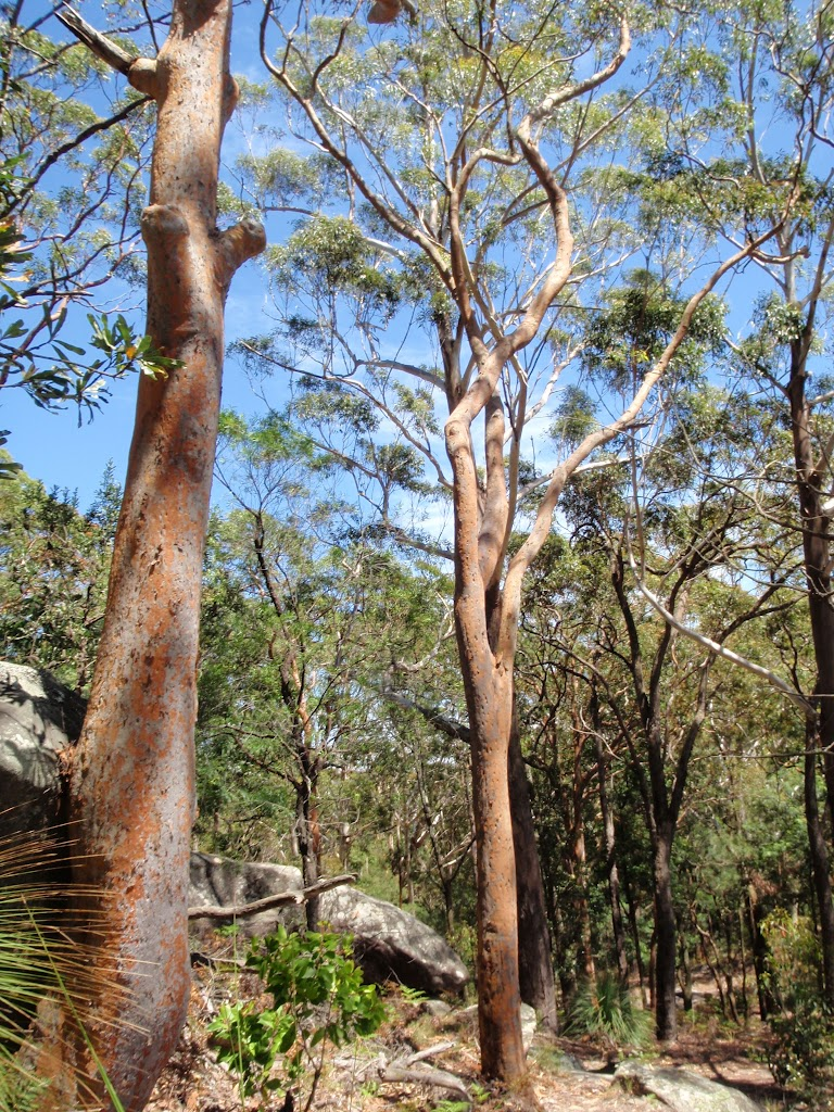 Large gums among the boulders