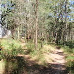 Track between Colin Watters Lookout and the tower (235580)