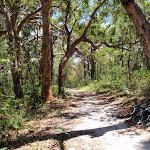 Warriwarri Lookout trail