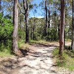 The sandy Warriwarri Lookout trail (235739)