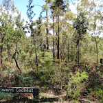 The overgrown Warriwarri Lookou