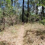 Warri Warri Track