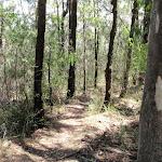 The dry scrub along Warri Warri Track