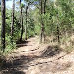 Glasson's Trail (237710)
