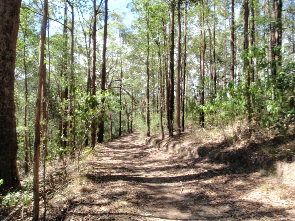 Tall trees line the trail