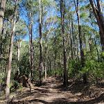 Glasson's Trail