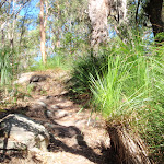 Dry bushland on ridge top