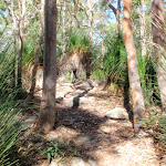 Grass trees on ridge (238013)