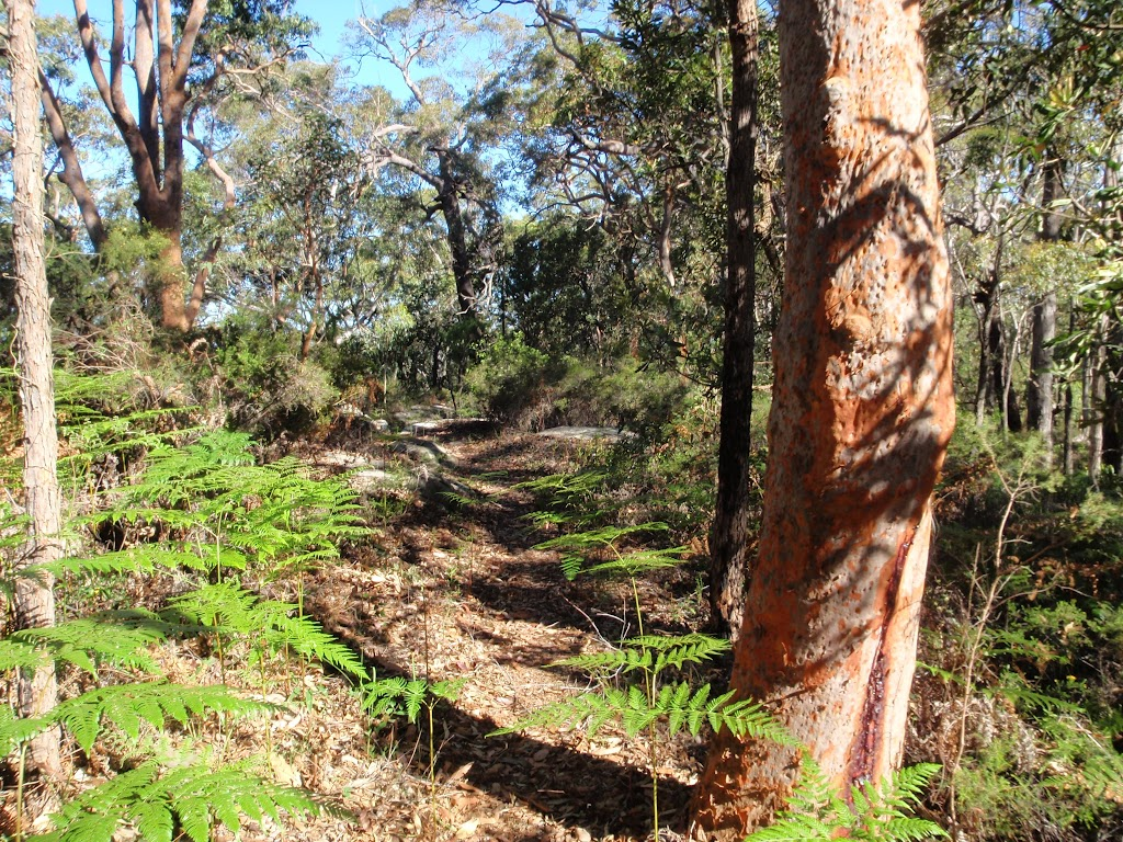 Lovely forest of Ferns and gums