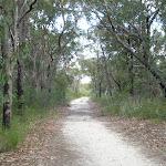 Heading through the bush (24003)