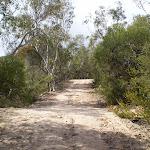 Continuing through the bush (24420)