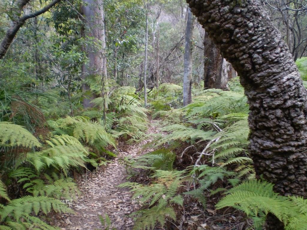 Through the ferns