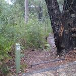 the step track bushtrack (24664)