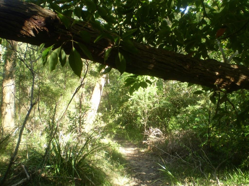 Track under tree branch