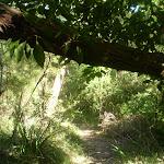 Track under tree branch (24922)