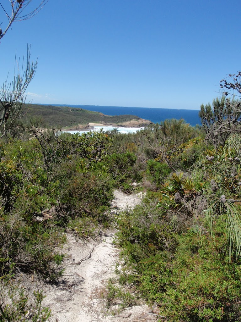 Looking down to Frazer beach from the Grass Tree Track