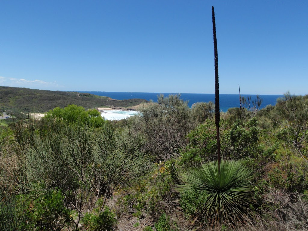 View from Grass Tree Track