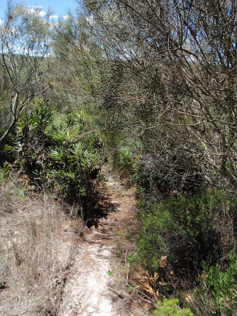 Overgrown track on Grass Tree Track