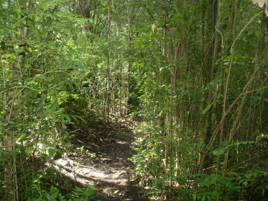 Terrys Creek Track