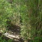 Terrys Creek Track (24967)