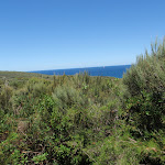 Ocean glimpse through the taller heath on Geebung Track