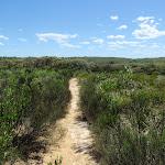 Heath and the Geebung Track