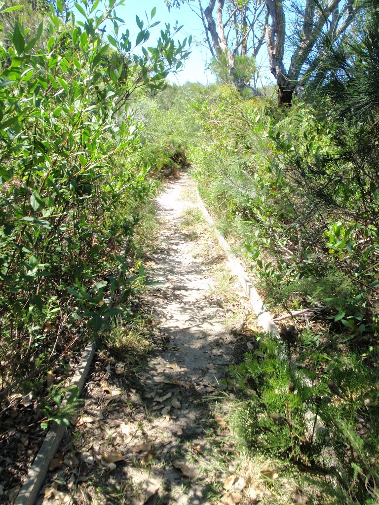 A section of the Geebung track more overgrown then most (250150)