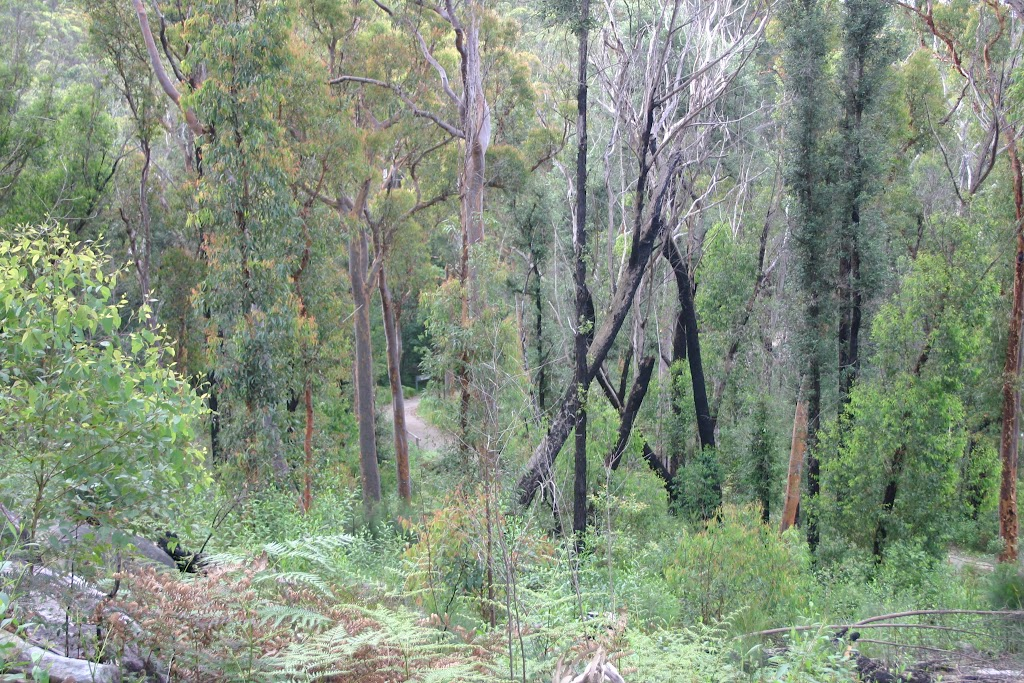Surrounding bush- possible to see the other part of the biketrack below