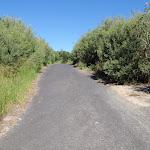 Sealed track between Freemans Camping area and Birdie Beach carpark (250855)