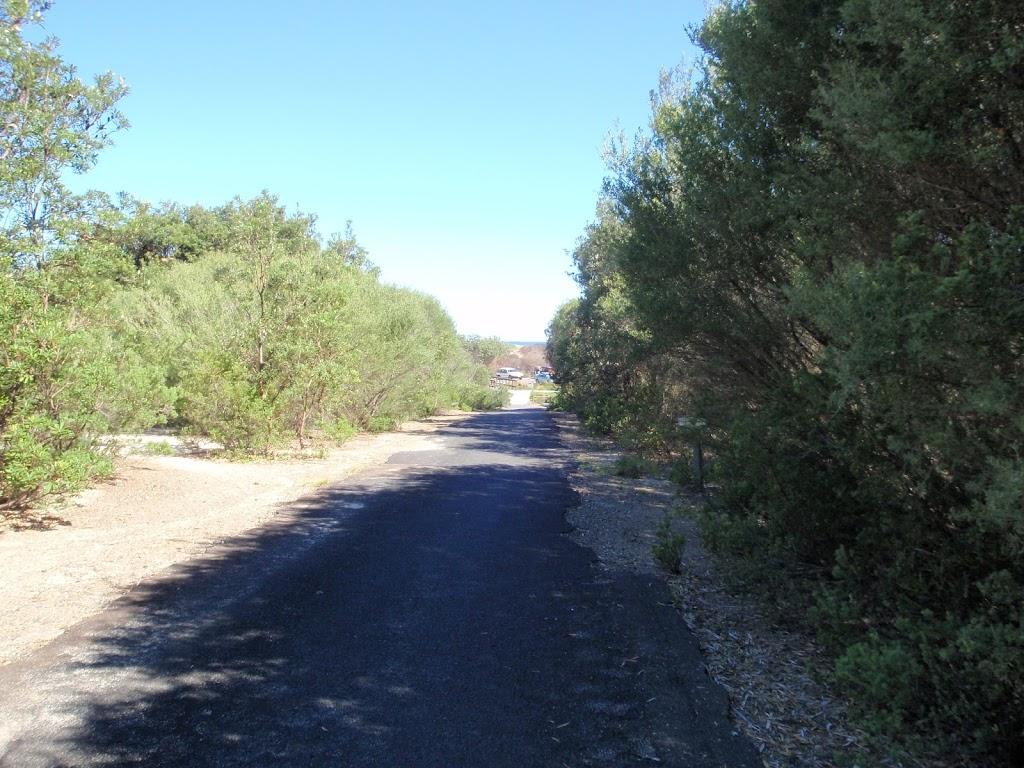 Tall heath beside path