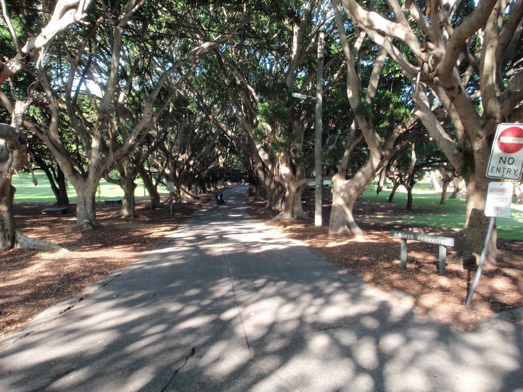 Tree lined path through Nielsen Park (251789)
