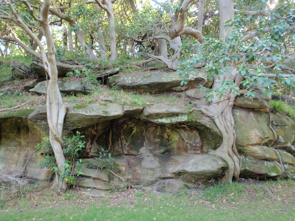 Rocks and trees in Nielsen Park
