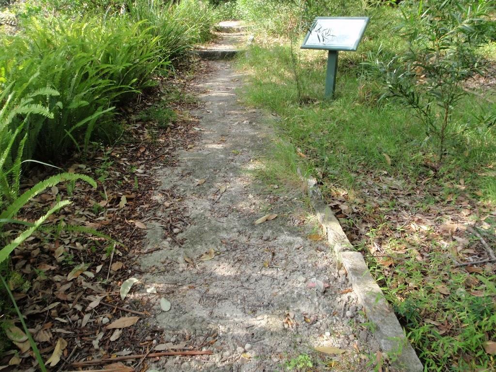 Mt Trefle Track (252458)