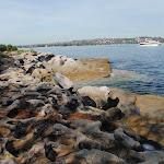Rocky harbour shoreline (253001)