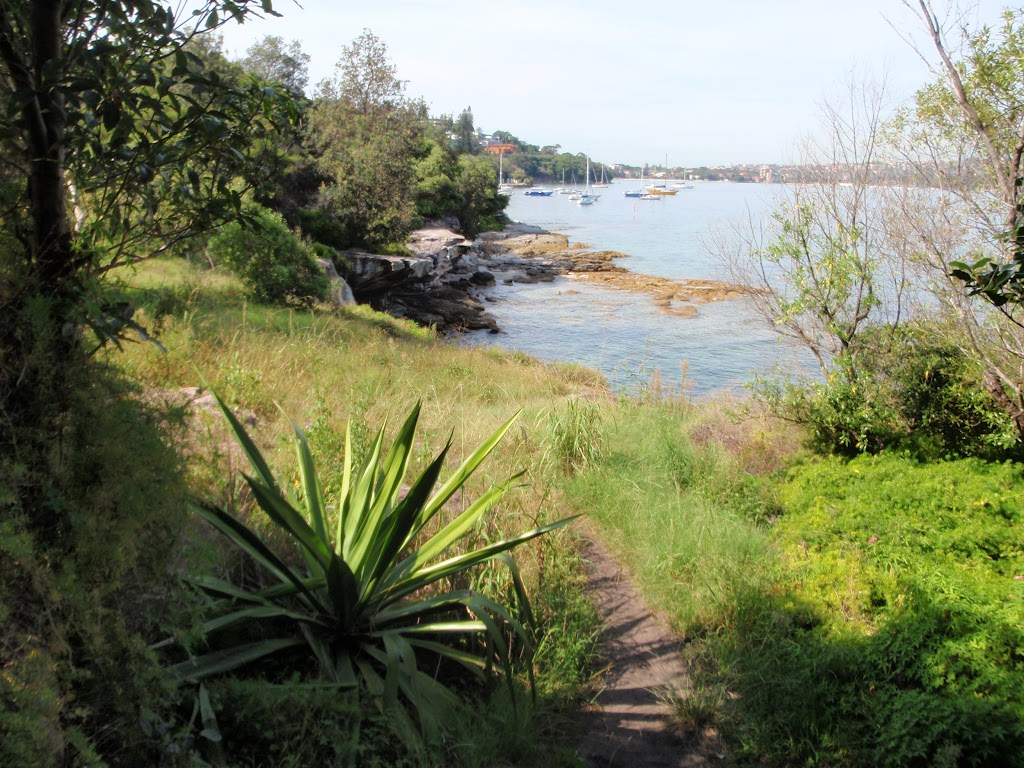 Weedy section of the Hermitage Foreshore Walk