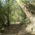 Warrimoo Track under the trees (25391)