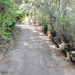 Old road south of Hermit Point