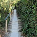 Walking mainly on footpaths through Mosman