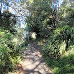 Bushwalking in Mosman