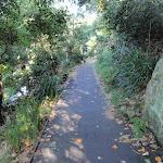 Walking track near Mosman (258182)